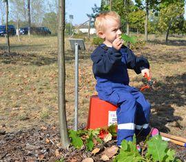 Der Sohn von Pflanzerin Stefanie Hellwig hilft bei der Pflege des Baumes